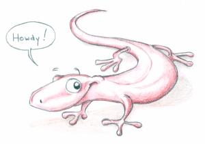 Mike Allegra Salamander Doodle
